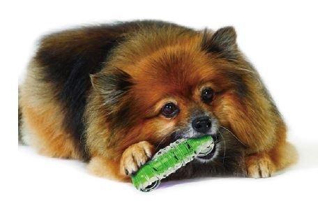 Petstages 265 綠咖咖果凍骨M 狗玩具 啃咬玩具 狗骨頭 寵物橡膠玩具 健齒玩具