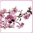 中調 - 櫻花 薰衣草 玫瑰