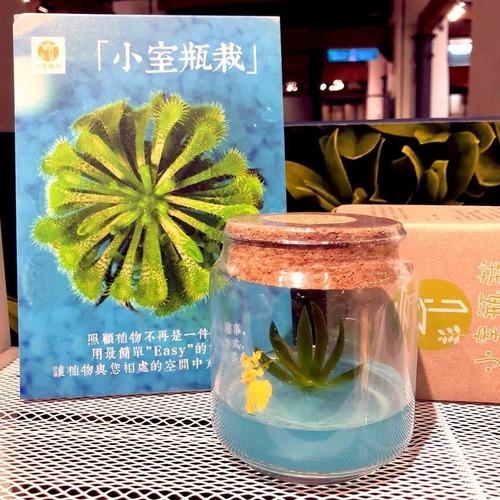 【小室栽瓶】不用澆水室內療癒植物 工業風系列 文新小蘭 毛氈苔 捕蠅小草
