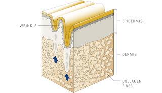 為什麼要補充膠原蛋白-水解膠原蛋白