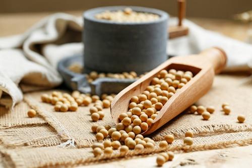 擁有豐富蛋白質的黃豆