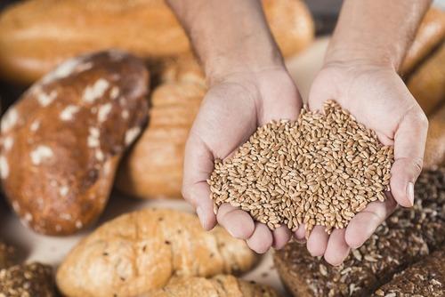 麥芽糊精主原料之一「小麥」