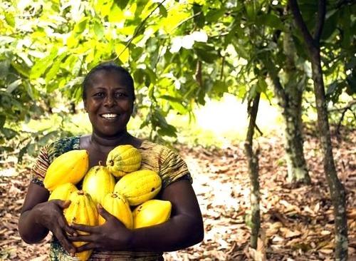 公平貿易可可豆農民雙手抱著可可豆
