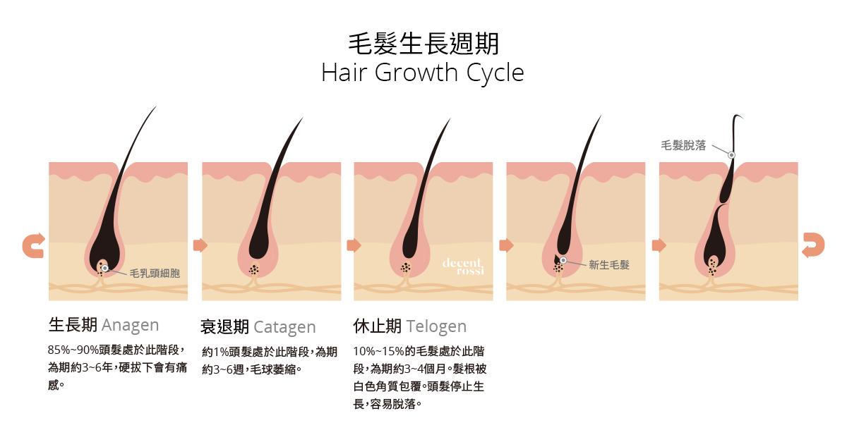 毛髮生長週期包含:生長期、衰退期、休止期。
