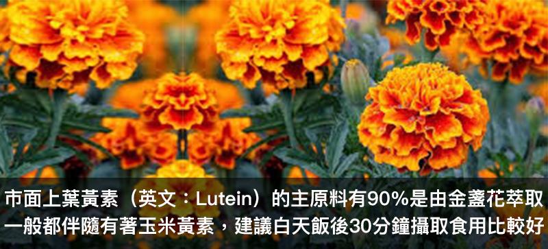 葉黃素 Lutein 原料 金盞花 著玉米黃素 食用