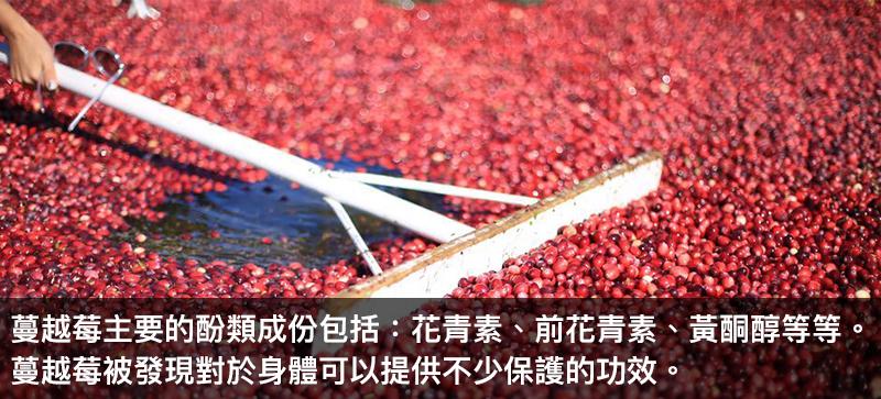 蔓越莓核心營養素-原/前花青素