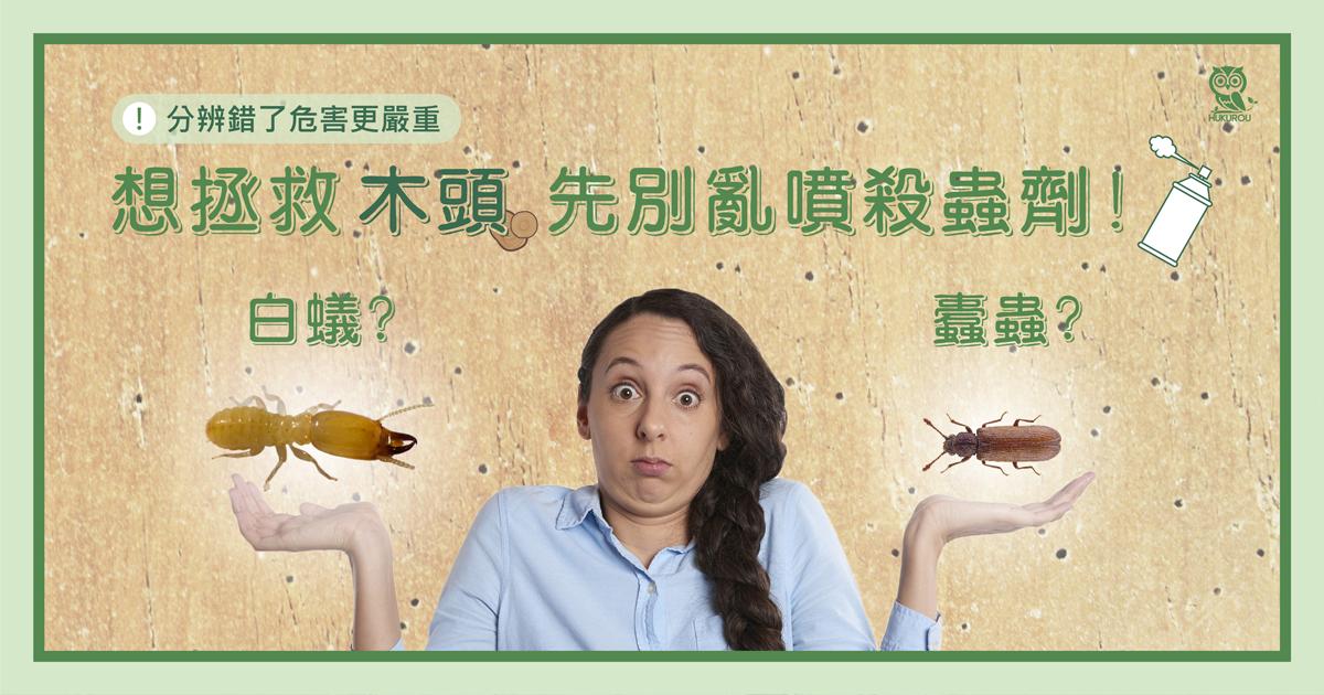 想拯救木頭先別亂噴殺蟲劑!搞清楚是白蟻還是蛀蟲惹的禍