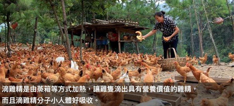 滴雞精是如何製作出來的呢?