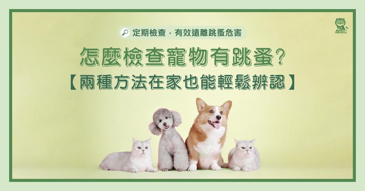 怎麼檢查寵物有跳蚤?兩種方法在家也能輕鬆辨認