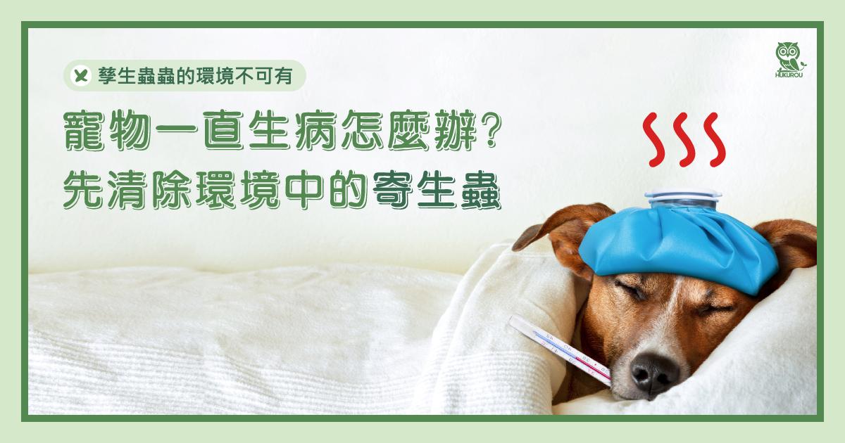 寵物一直生病怎麼辦?先清除環境中的「寄生蟲」