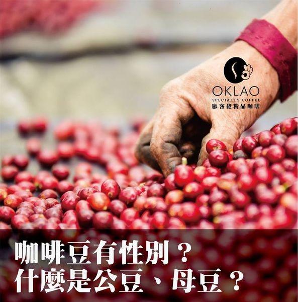 咖啡豆有性別?什麼是公豆、母豆?