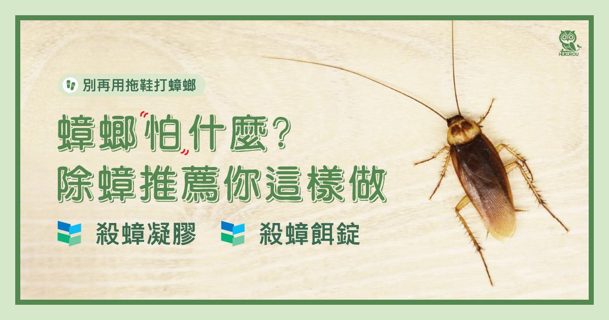 蟑螂怕什麼?該如何消除蟑螂?除蟑推薦你這樣做就對了