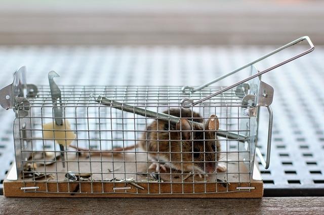 如何抓老鼠