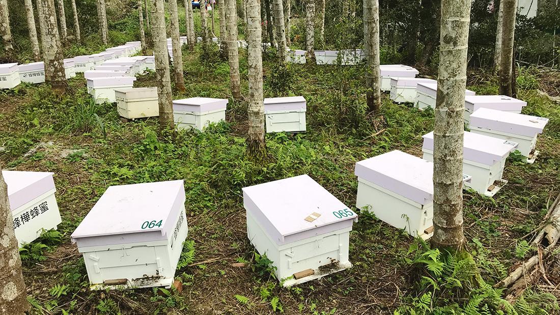 龍眼蜜與荔枝蜜在台灣占據了大部分的蜂蜜市場,身為最受台灣人喜愛的龍眼蜜,也是蜜種中氣味最為濃厚、甜度最為明顯的,但你知道龍眼蜜的產地在哪裡嗎?  隨著溫度變化,龍眼花的花期通常在三到五月的春天開花,從三月的高雄、台南開至四五月的中部地區,逐花而居的蜂農需要將蜜蜂們放置於乾淨無農藥殘留的環境,如果遇上天氣異常或是氣溫擾亂種種因素影響,辛辛苦苦的勞動成果可能就會一無所獲了,沒有想到生活中隨處可見的蜂蜜如此得來不易吧? | 蜂樺蜂蜜專賣店
