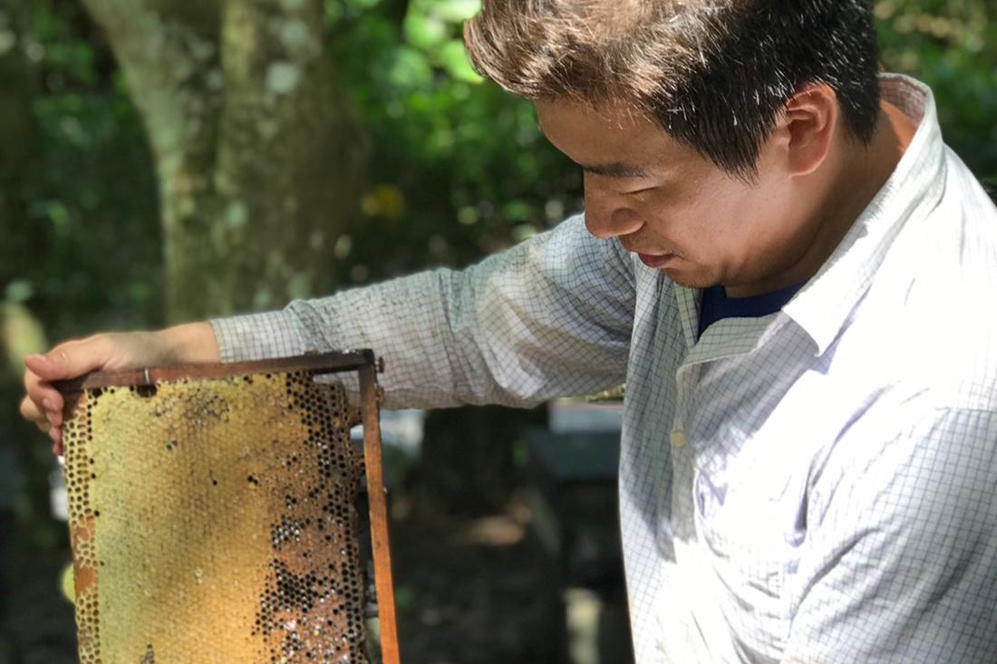 一般的蜂蜜因釀酵時間較短的緣故,蜂蜜裡的水分含量較高,需要透過壓縮才能變成我們常見的蜂蜜,而自然封蓋熟成蜜相比於一般蜂蜜,增加了更長的釀酵時間,將更多的酵素以及營養保存在熟成蜜中,可以更好幫助人體吸收蜂蜜中的營養,成為運動或身體疲勞時,快速補充身體營養的好選擇! | 蜂樺蜂蜜專賣店