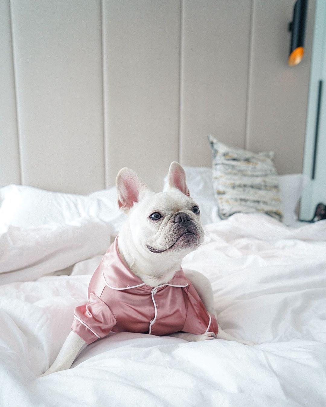 可帶寵物入住的香港酒店|香港酒店推介