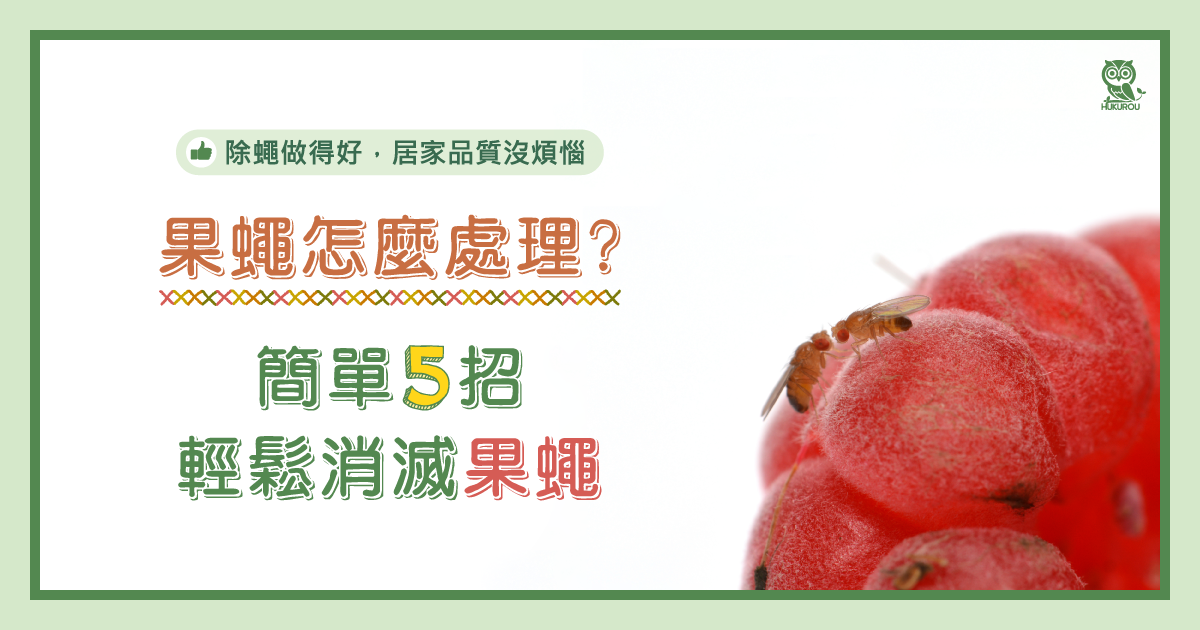 果蠅怎麼處理?簡單5招輕鬆消滅果蠅