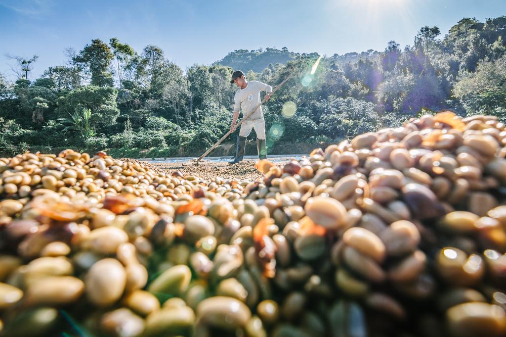 咖啡豆產地