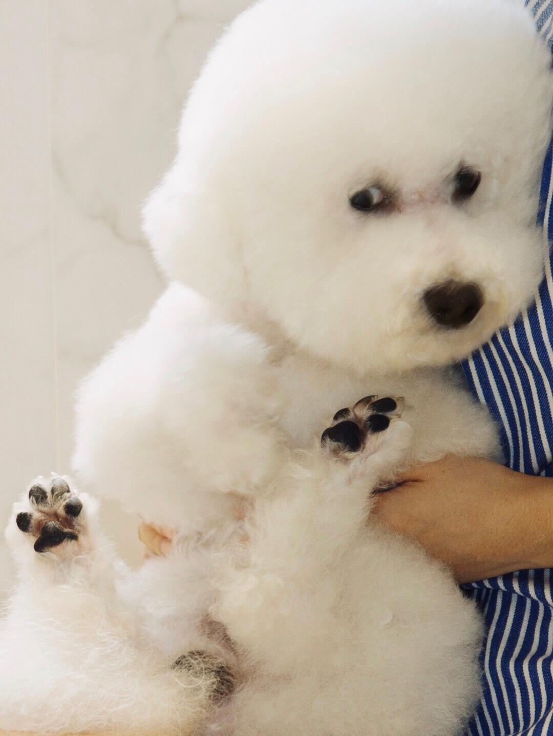 【評價狗狗神仙粉】用家Bear: 用過最有效安心的狗狗保健品,有獸醫設計過俾狗狗食果然有效D,放心D