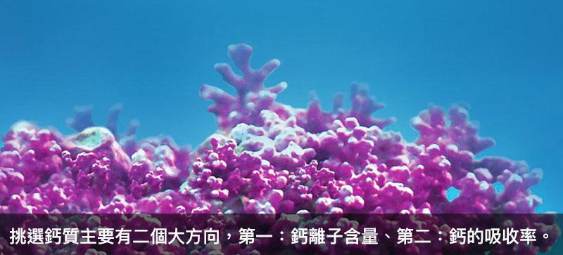 海藻鈣功效:補充鈣離子