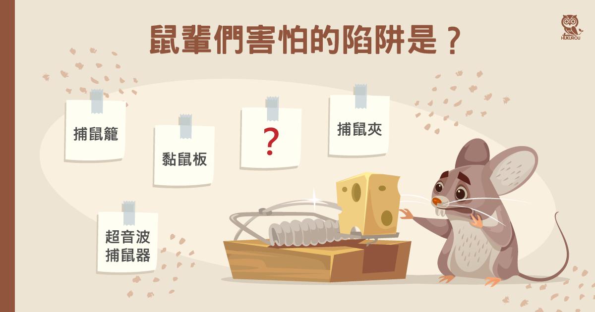老鼠陷阱怎麼選?環保無化學藥劑抓老鼠陷阱推薦