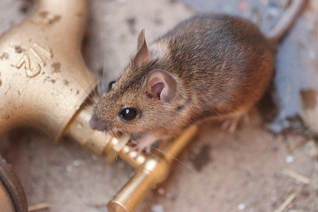 老鼠藥哪裡買