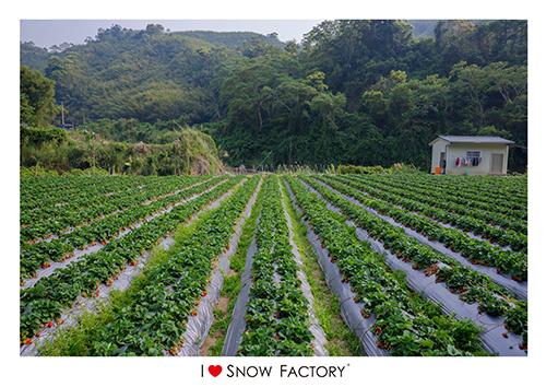 實際走訪好山水草莓園,才知道好山水果然是名不虛傳,在這塊沒有汙染的土地上,以自然農法培育出鮮甜味美的草莓果實,讓我們在享受天然珍饌的同時,也不需擔心化學藥劑的危害,農家的用心,我們感恩於心。