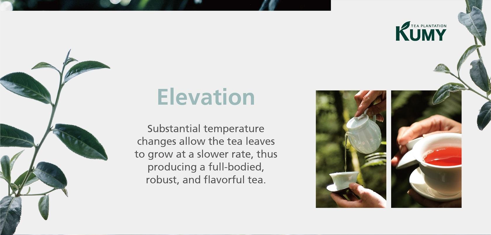 KUMY Tea Plantation Elevation 2000-2200M