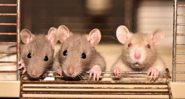 抓老鼠妙招還有這一招!新式環保老鼠陷阱