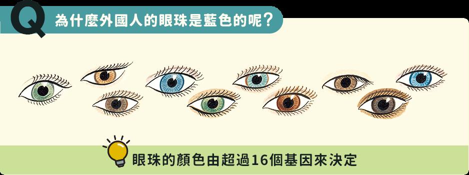為什麼外國人的眼珠是藍色的呢?眼珠的顏色由超過16個基因來決定