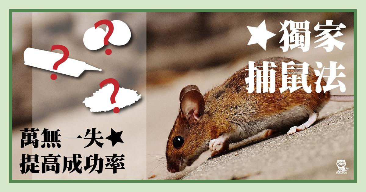 捕老鼠什麼方法最快速?神奇捕老鼠器帶你擺脫捉鼠陰影