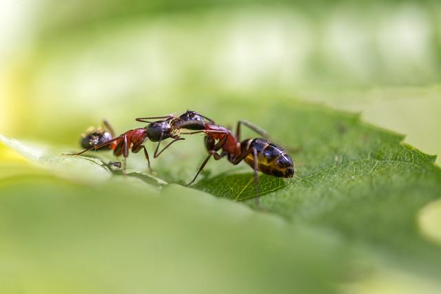 推薦的螞蟻藥原理是什麼?會不會過一陣子就沒用了?