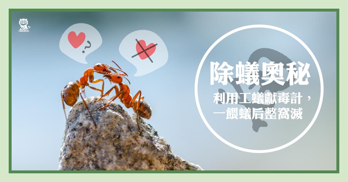 螞蟻藥原理是什麼?徹底消滅,螞蟻藥推薦這樣選!