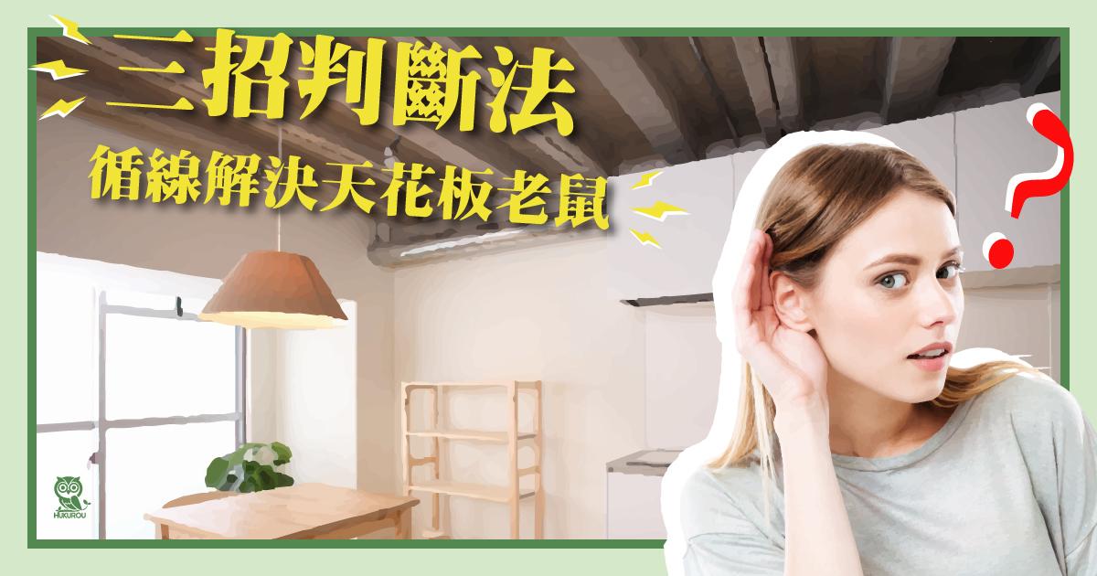 天花板有老鼠怎麼辦?天花板老鼠聲音怎麼判斷?