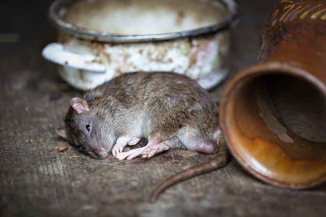 捕鼠神器推薦你!快速捕鼠扼殺就靠它