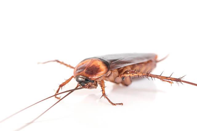 蟑螂老鼠可以一起消滅嗎?有沒有共同害怕的東西