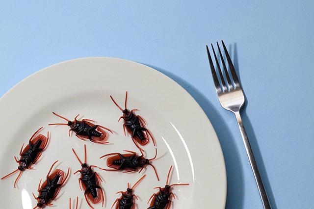 這些滅蟑迷思與傳說,你也聽過嗎?