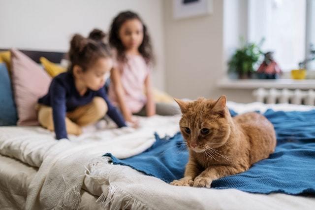家裡有養貓狗,如何消滅跳蚤?