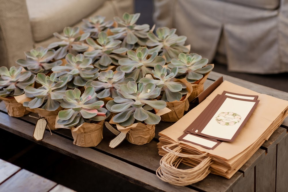 婚禮小物迎賓禮盆栽
