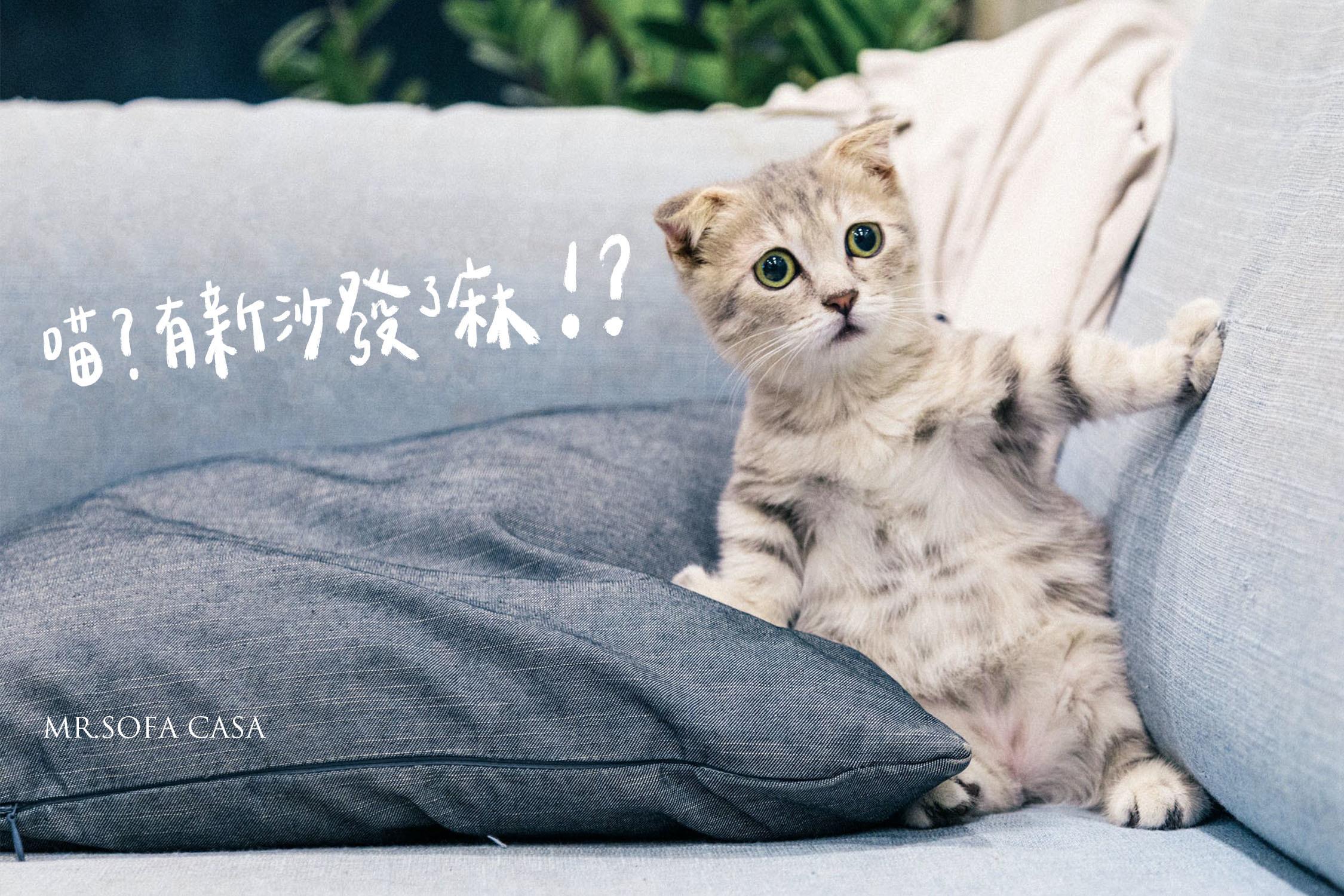 貓抓布沙發與貓抓皮沙發優缺點