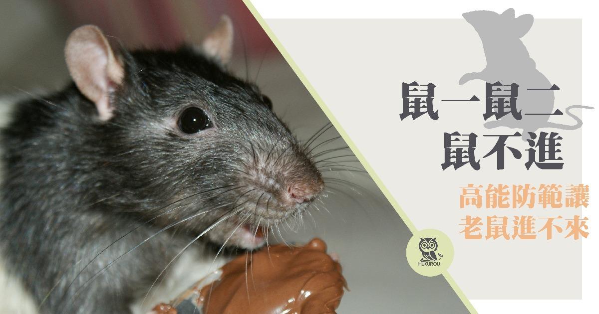 鼠害防治怎麼做?滅鼠專家告訴你鼠害防治方法