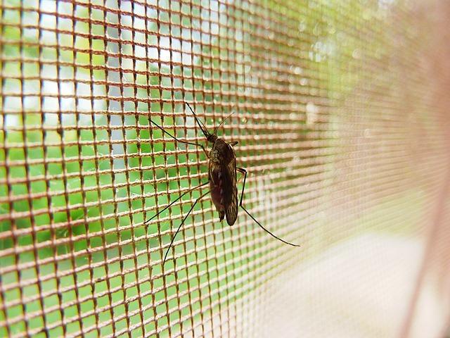 滅蚊用捕蚊燈、蚊香有什麼優缺點?