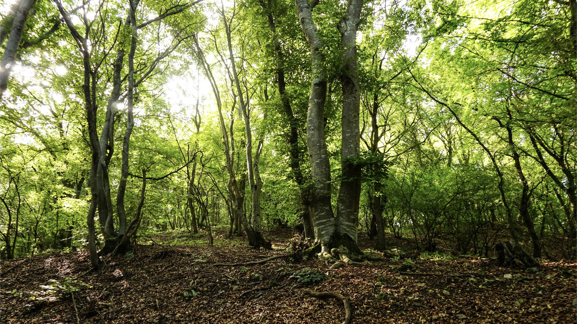 一片高大樹木的森林