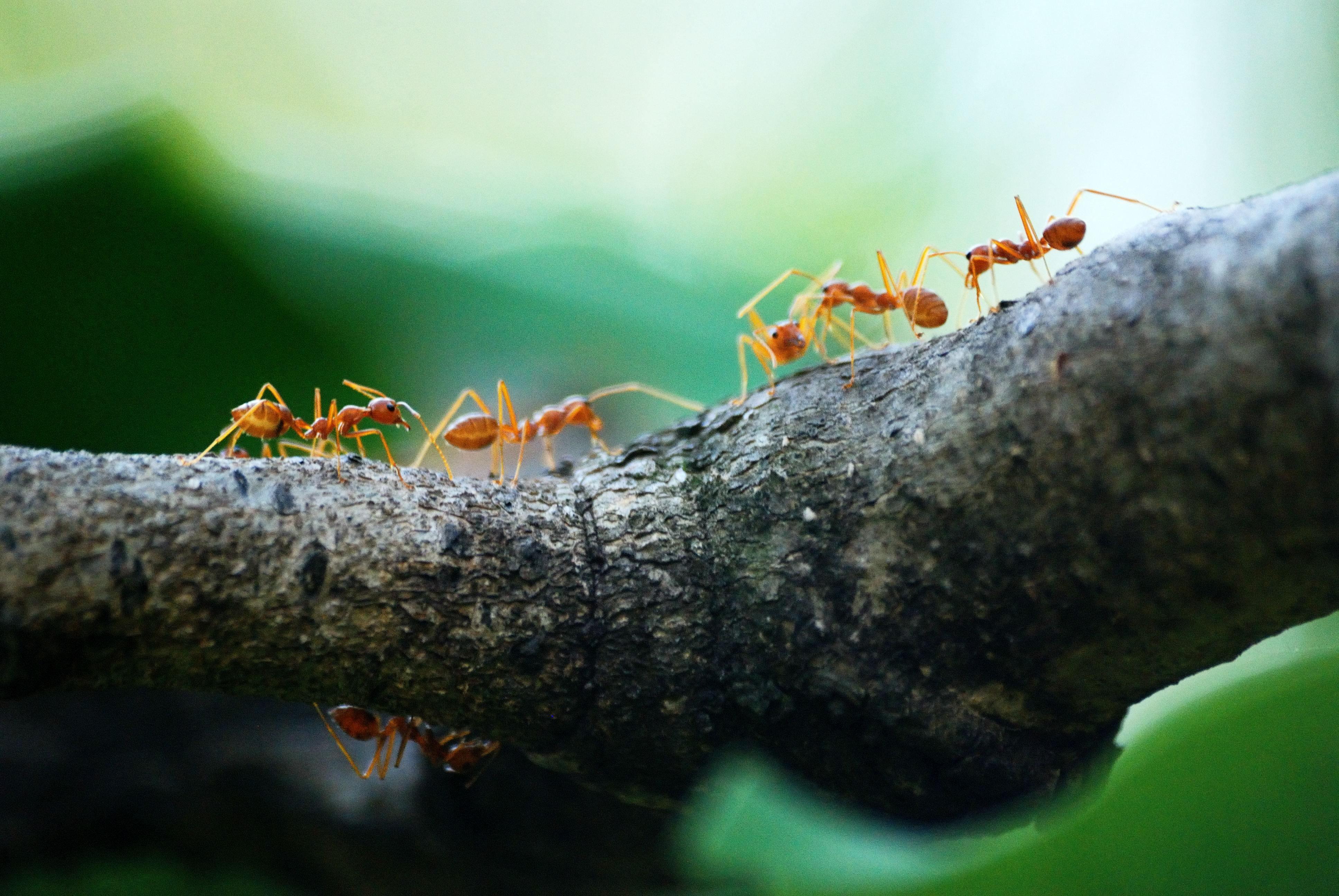 殺螞蟻推薦你找除蟲專家