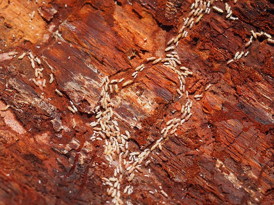 如何滅白蟻?常見滅白蟻方法有哪些?