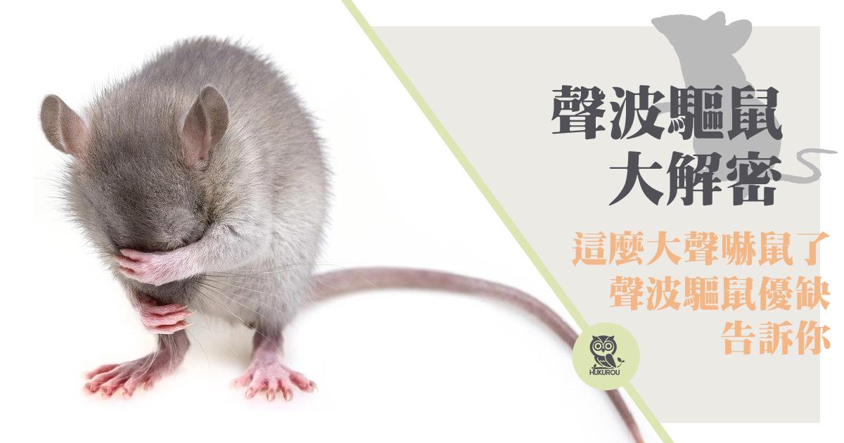 驅趕老鼠靠聲音就行?驅趕老鼠方法建議用超音波嗎?