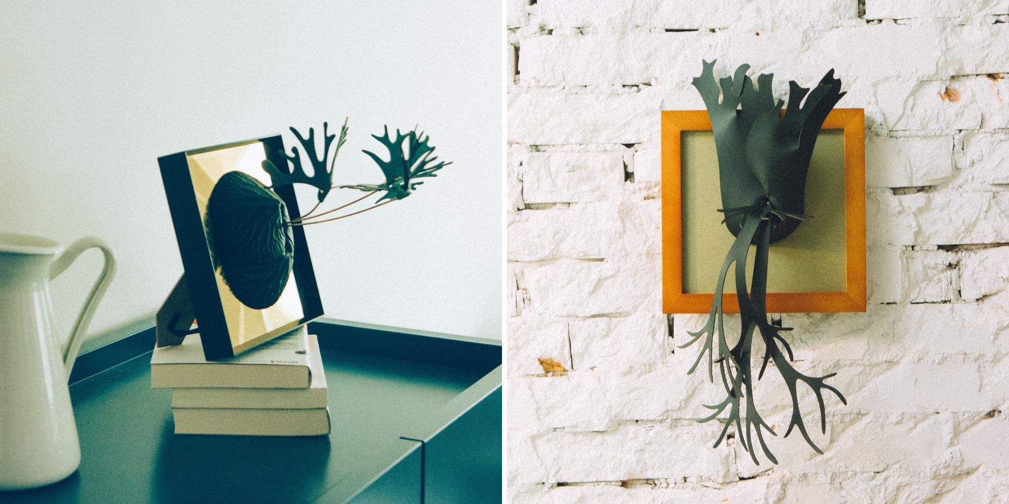 二叉鹿角蕨和爪哇鹿角蕨,放在家裡不僅綠化美觀,也能擴香的皮革植物