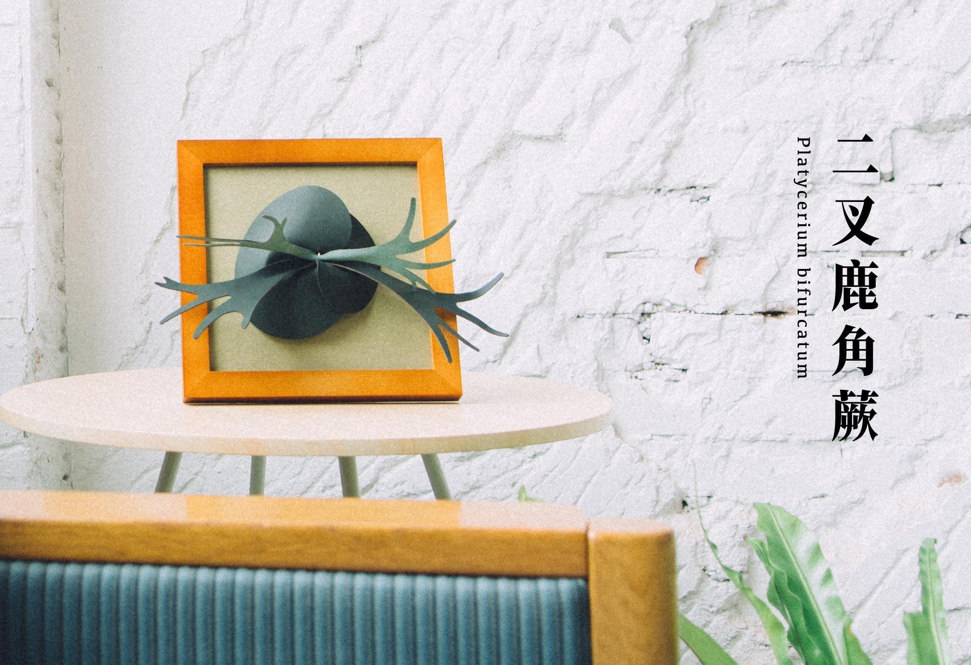 二叉鹿角蕨放置於床邊,一早起來恬淡清新的香氛讓人精神奕奕