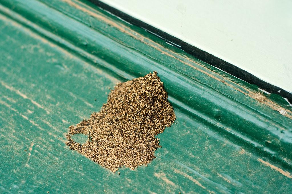 白蟻幼蟲會對環境造成危害嗎?
