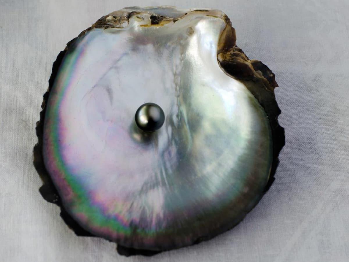 大溪地黑珍珠的顏色來自於黑蝶貝的黑色唇邊,是珍珠當中稀有價高的品種。
